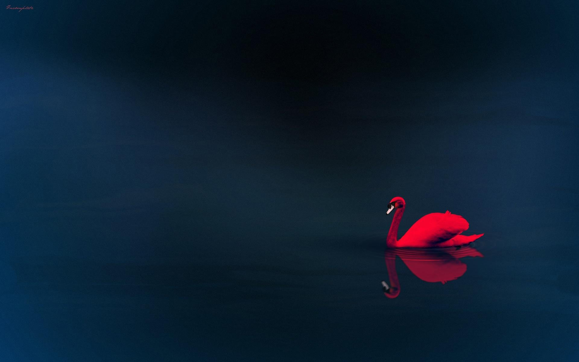 Cisne Rojo