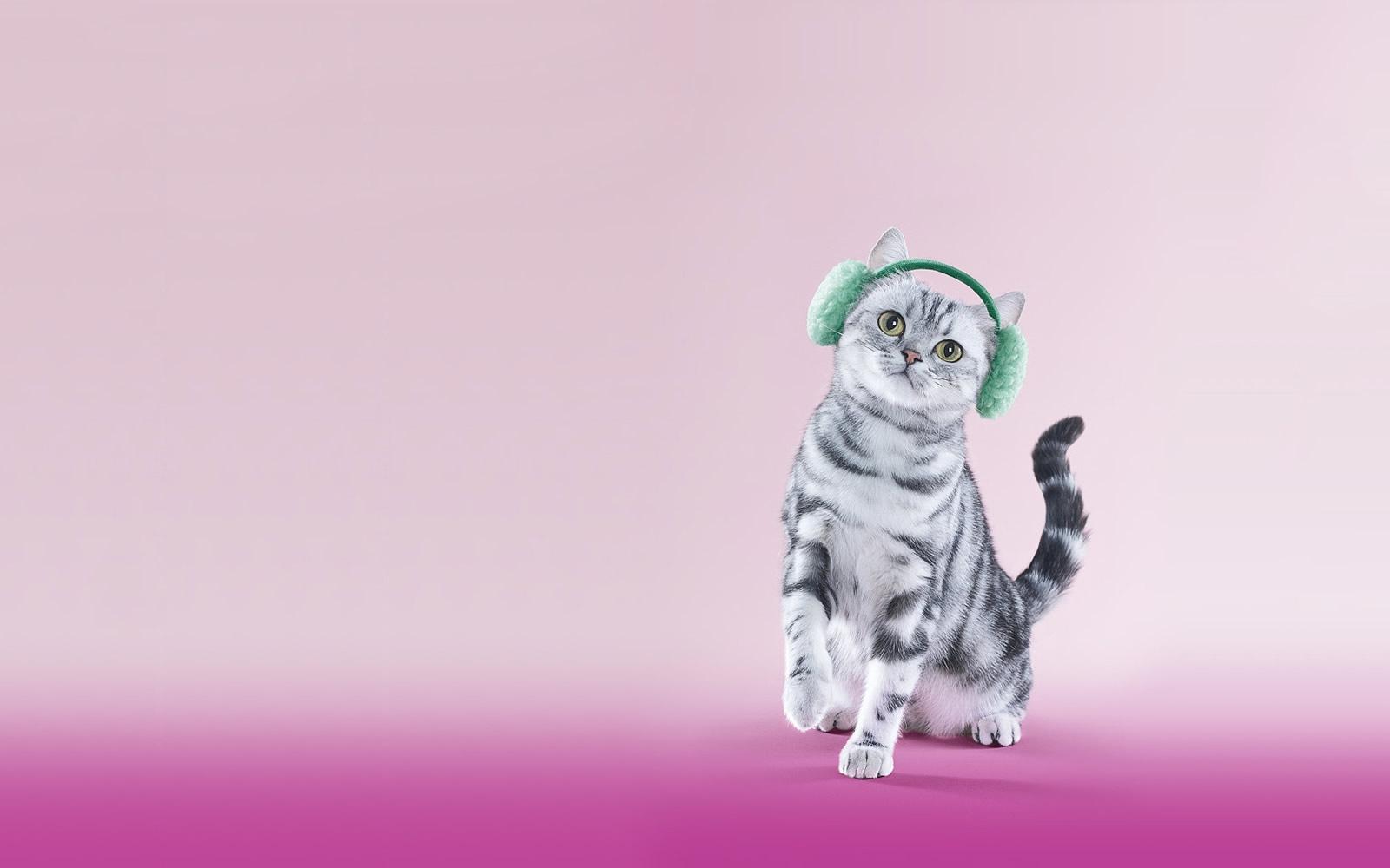 Fondo de Gatito Simpático