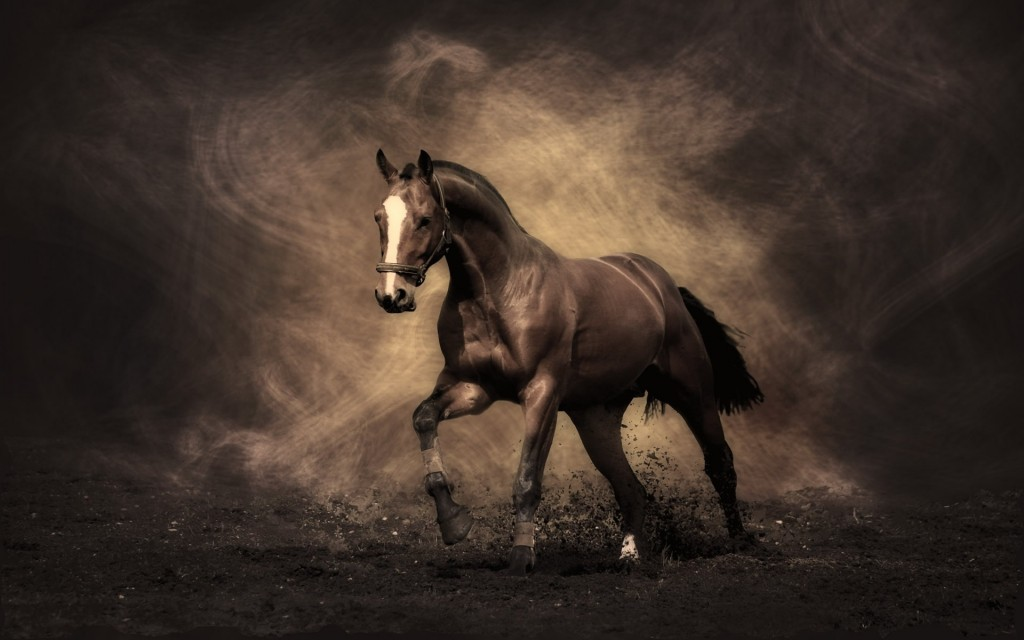 Wallpaper Caballo Andaluz