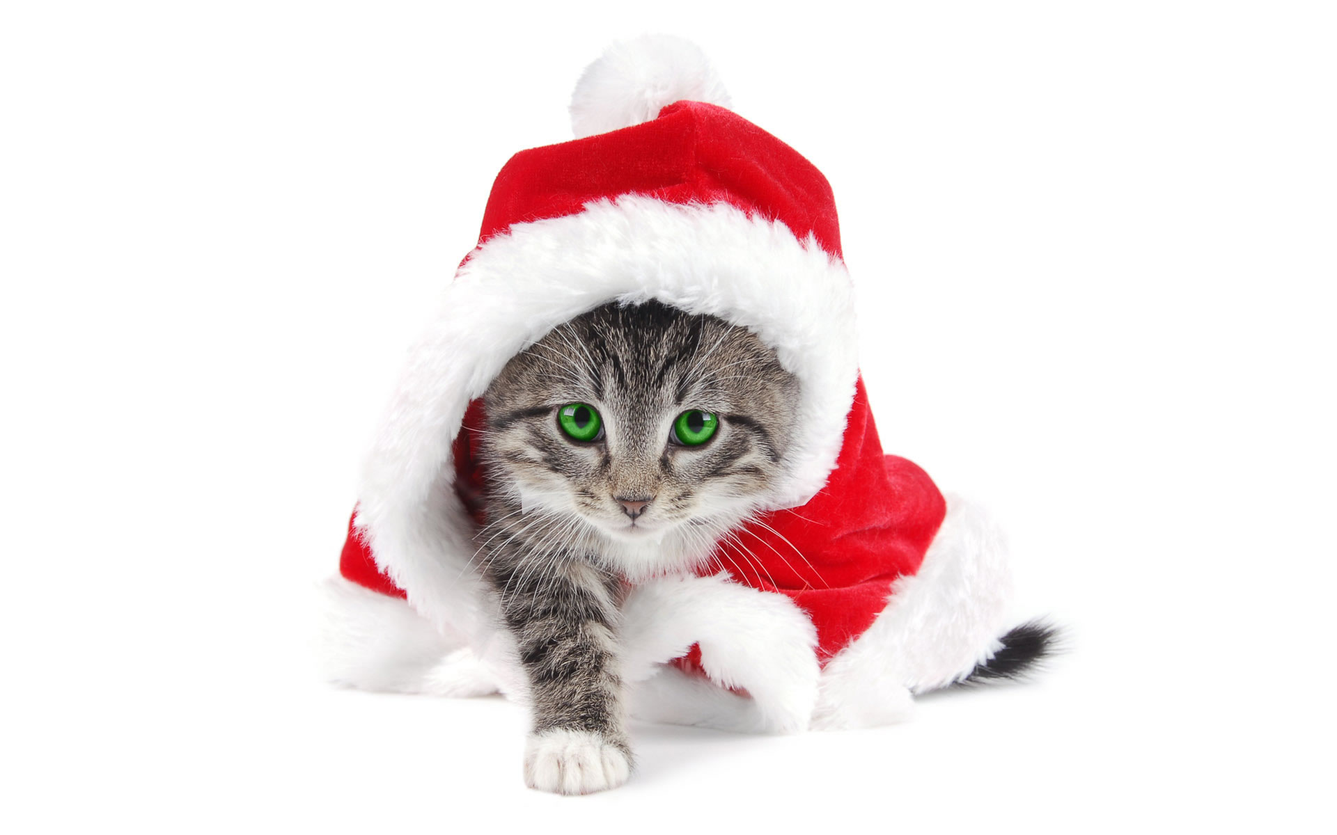 Gatito Santa Claus Wallpaper