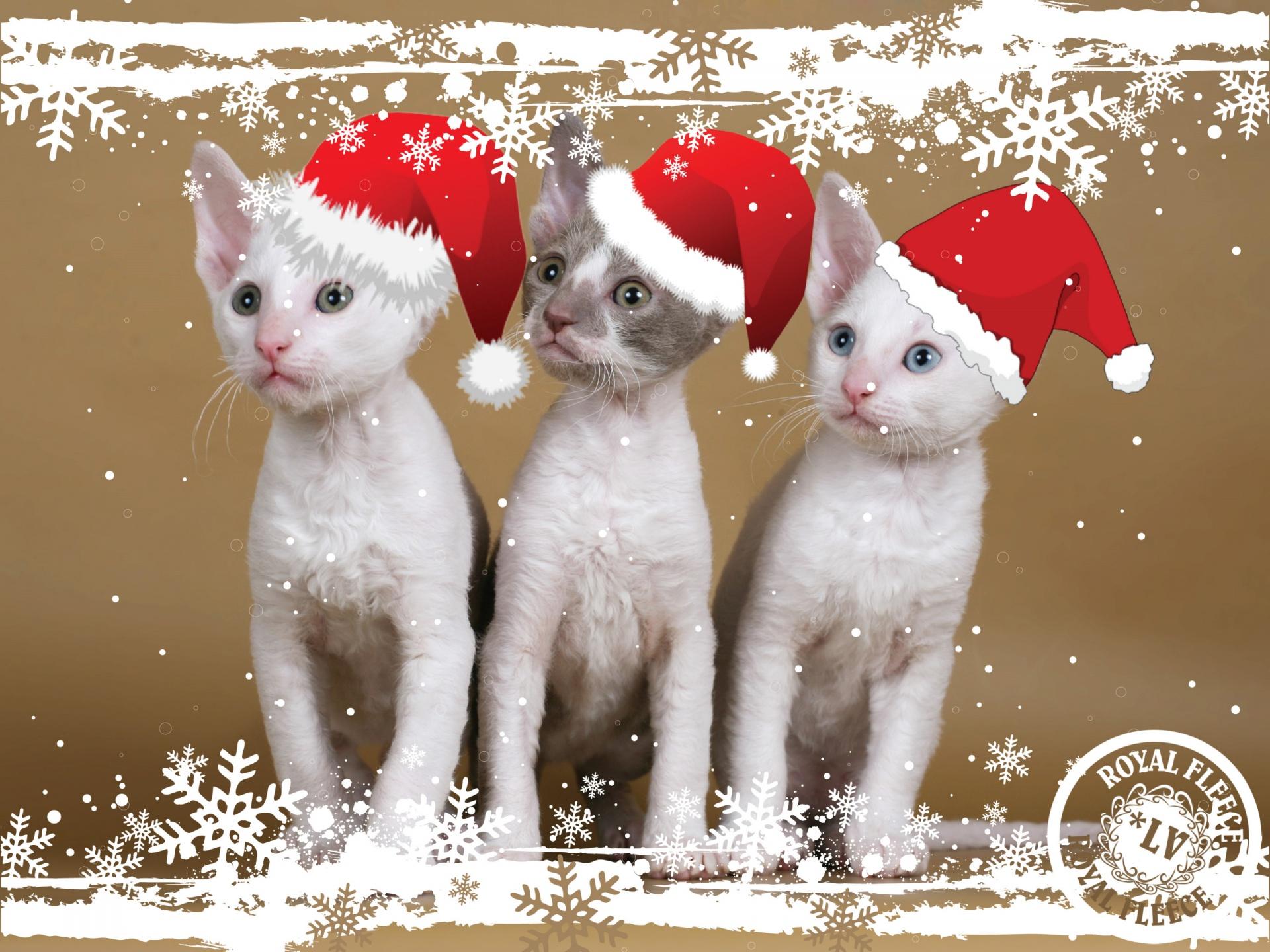 Postal de Navidad Wallpaper