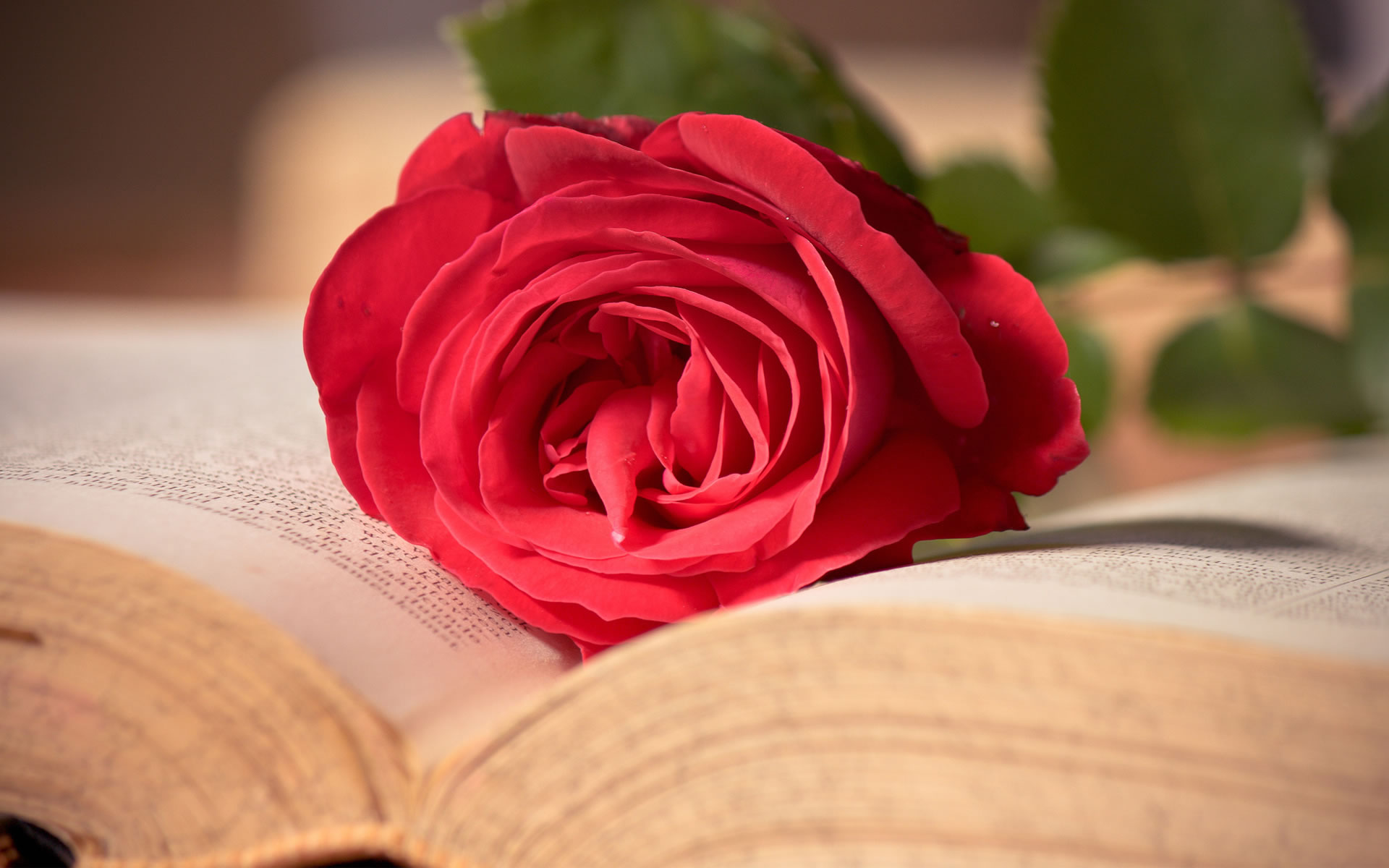 Wallpapers Románticos. Rosa