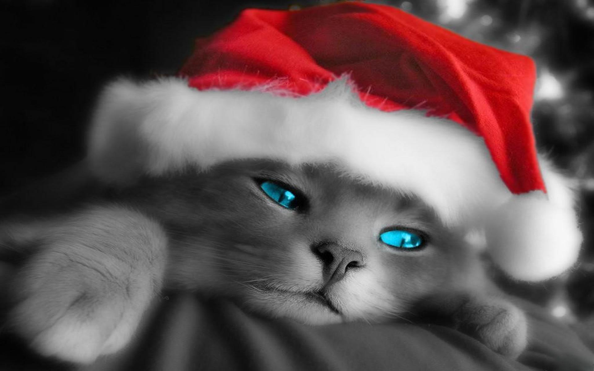 Gatito Santa Claus