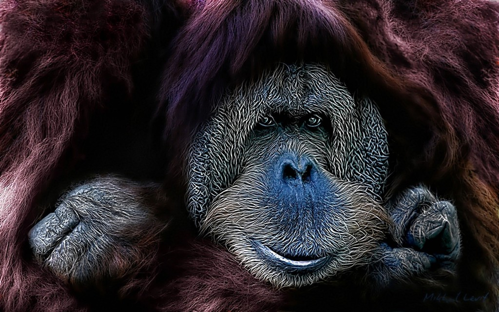 Orangután Wallpapers Animales Wallpapers