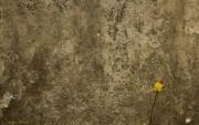 Textura de pared Antigua