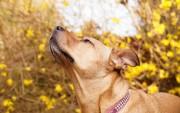 Perro con collar. Wallpapers de Animales