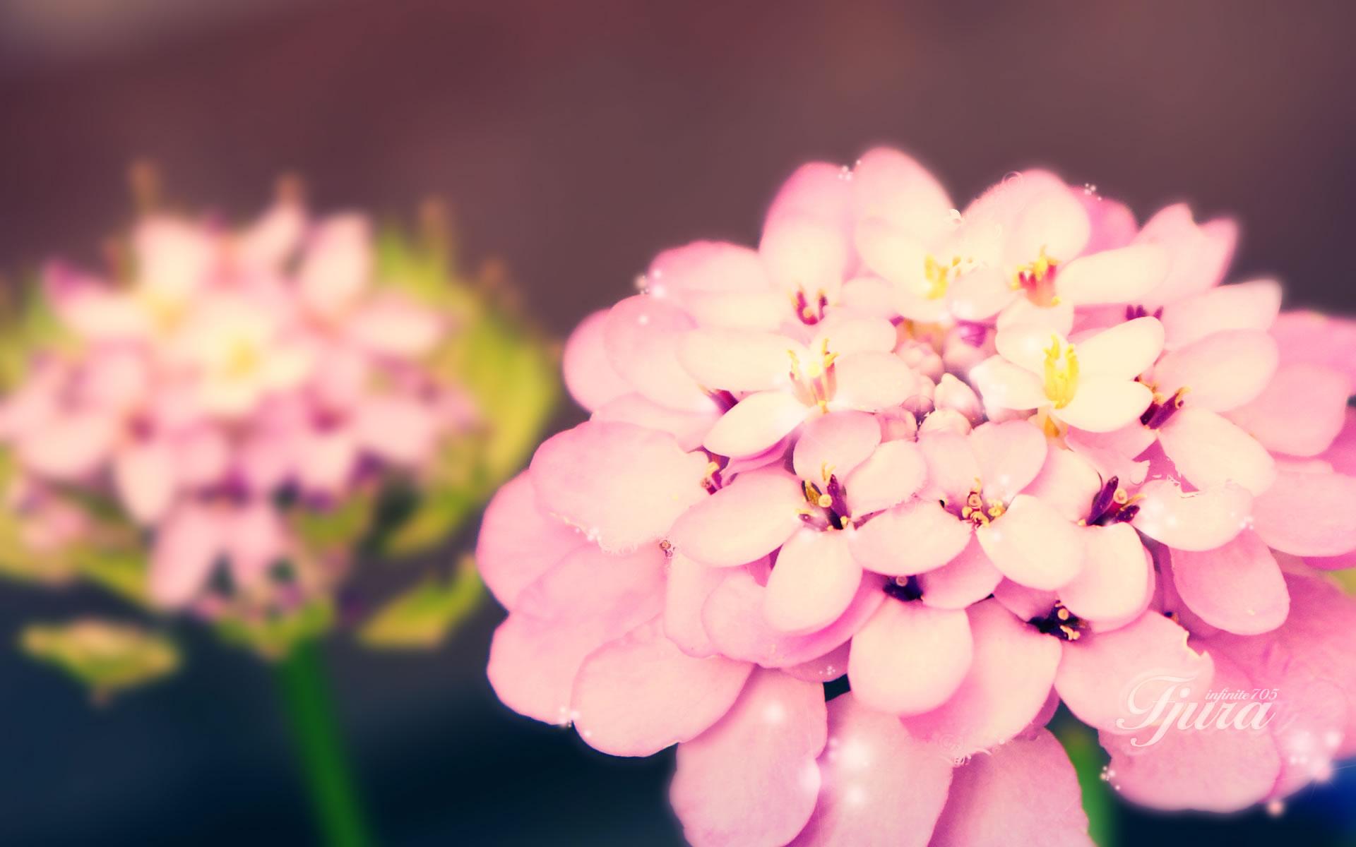 Zoom Floral