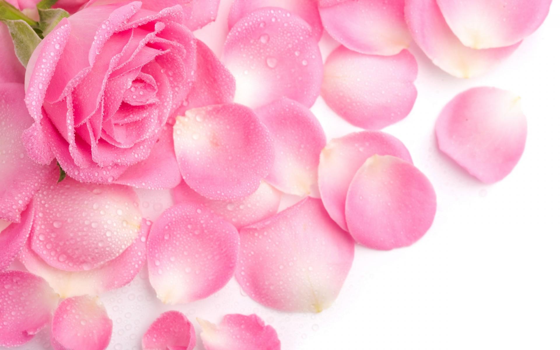 Rosa para Móvil - Wallpapers