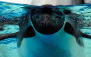 Pingüino bajo el agua