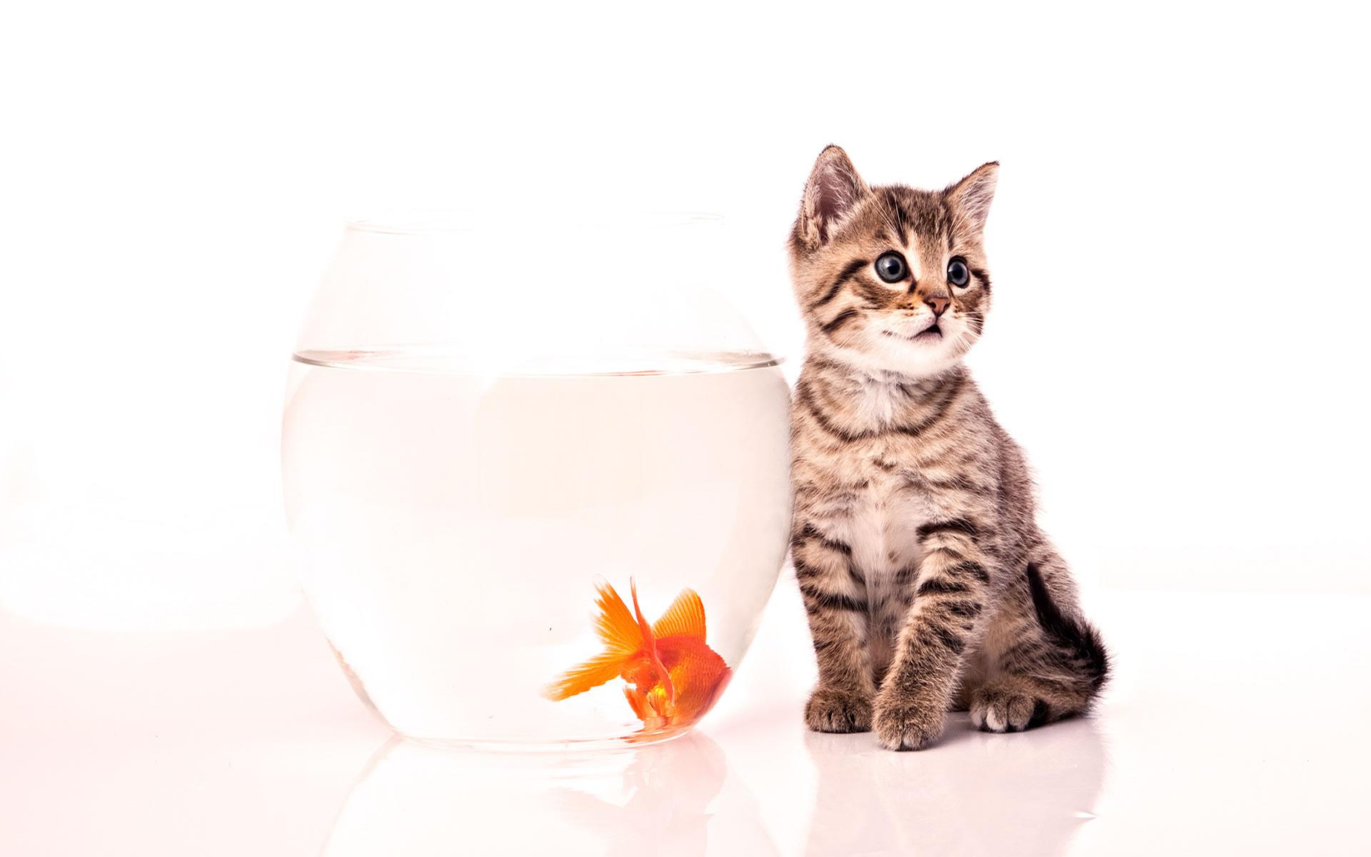 Gatito Feliz con Pez Naranja