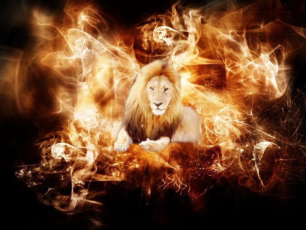 León entre el fuego