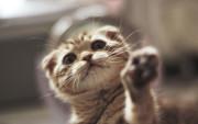 Un gatito llamando a tu fondo pantalla.