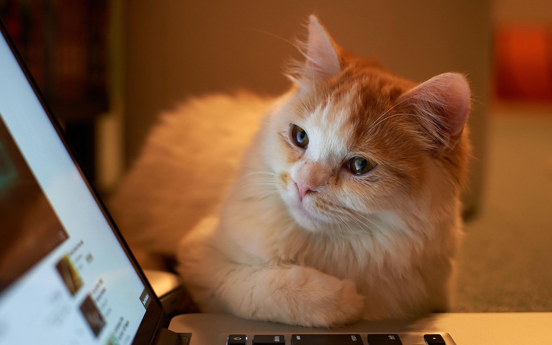 Gatito Curioso.