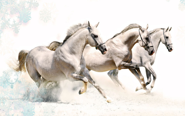 Caballos Al Galope Wallpapers Wallpapers