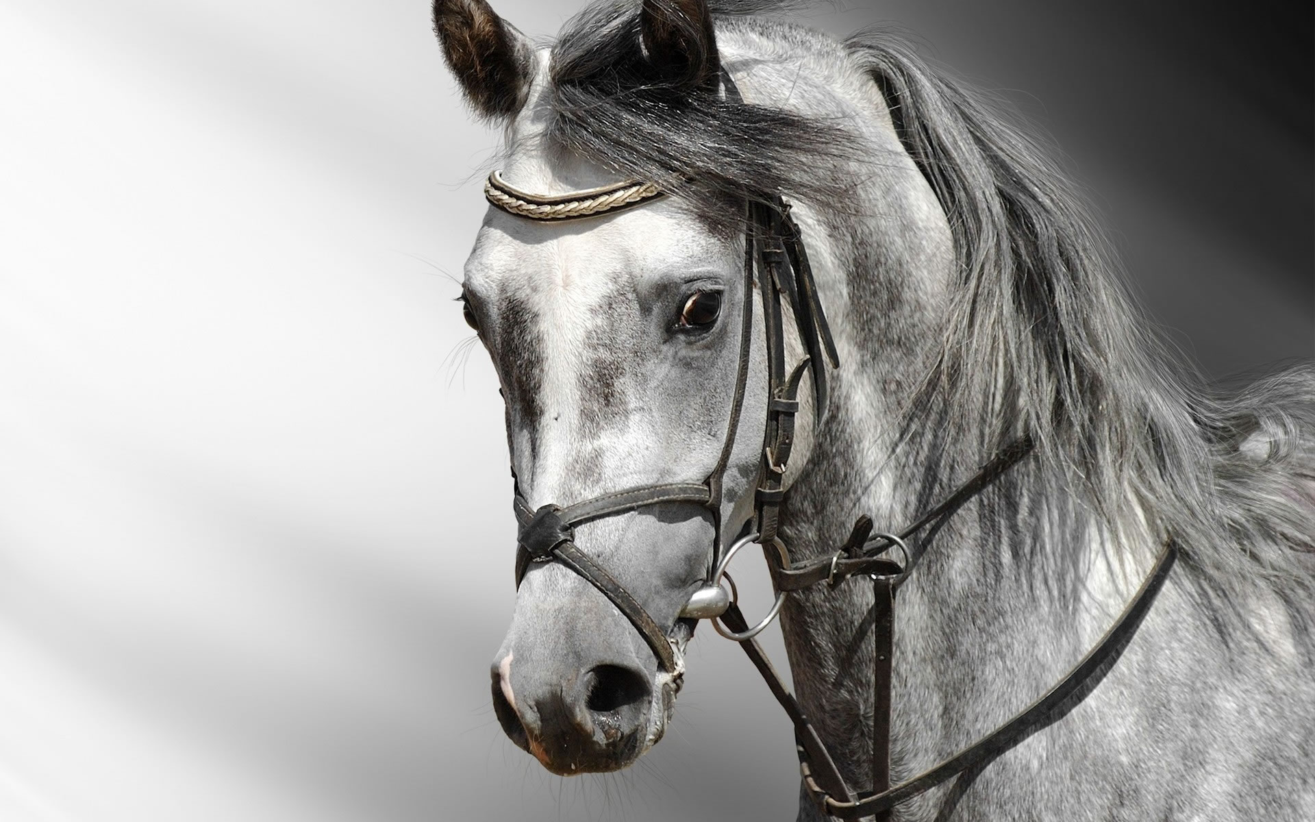 Caras de Caballo Wallpaper - Wallpapers - Wallpapers