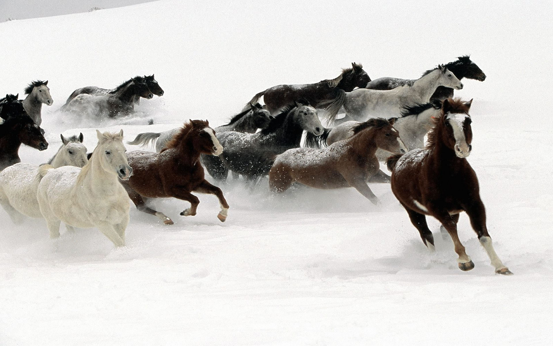 Imágenes de Caballos Corriendo