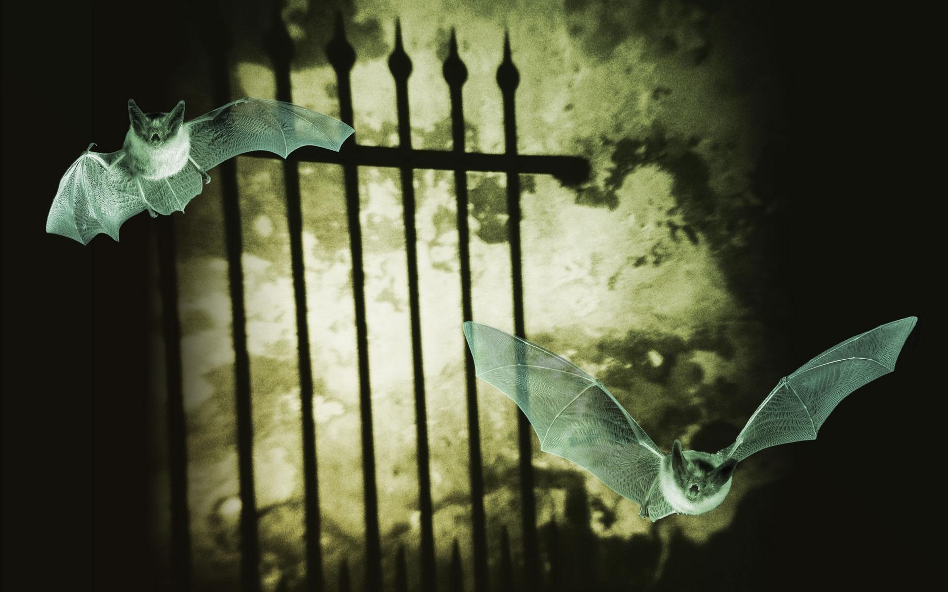 Wallpaper de Halloween con murciélagos.