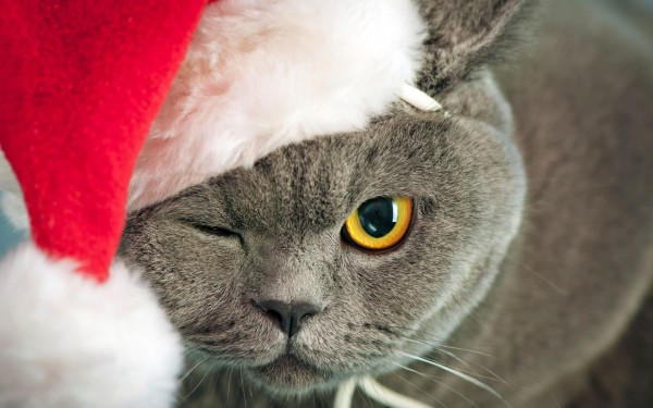 Gatito Santa Claus Happy Christmas