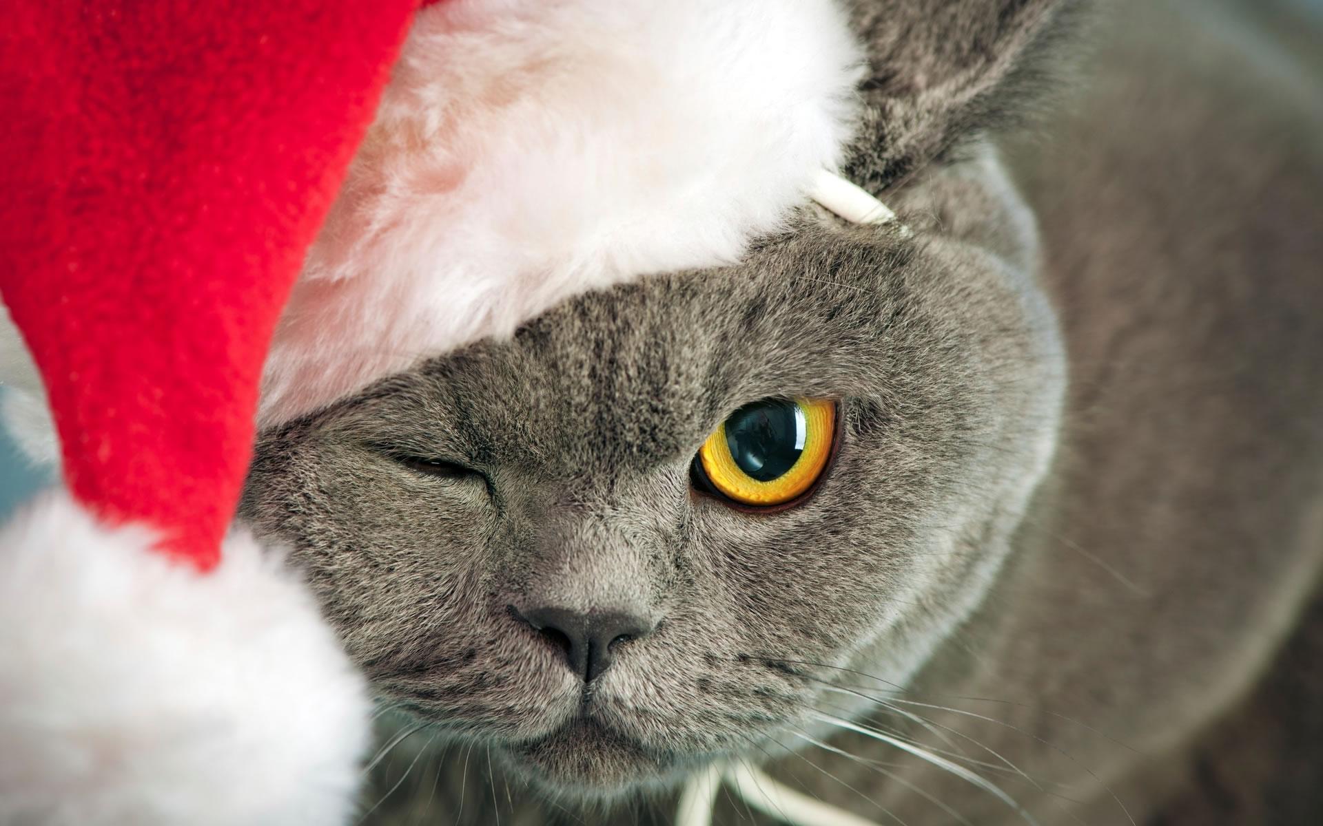 La mascota de Santa Claus