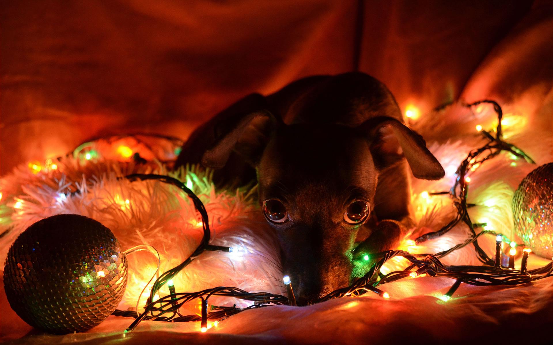 Perrito con Luces Navidad.