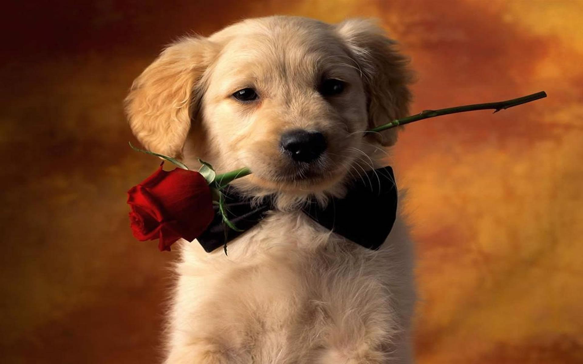 Perrito preparado para San Valentín