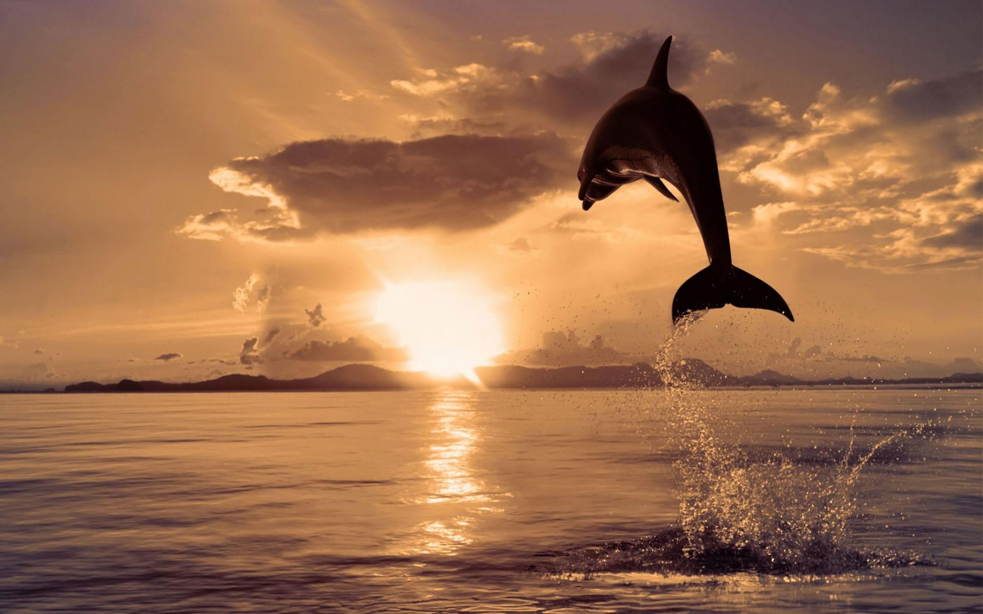 Delfín para fondo de escritorio