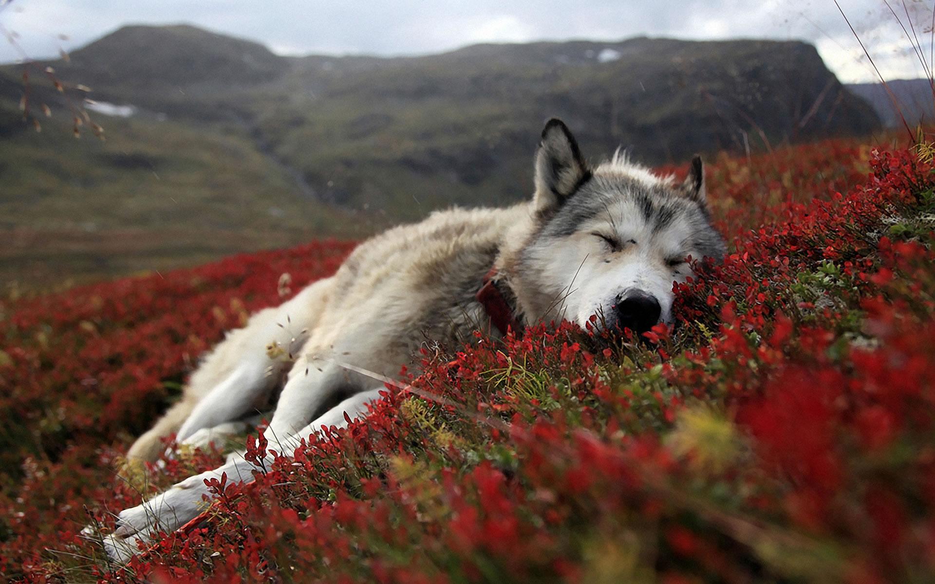 Perro en campo de Flores