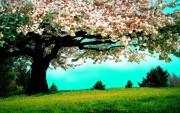 Wallpaper La Primavera