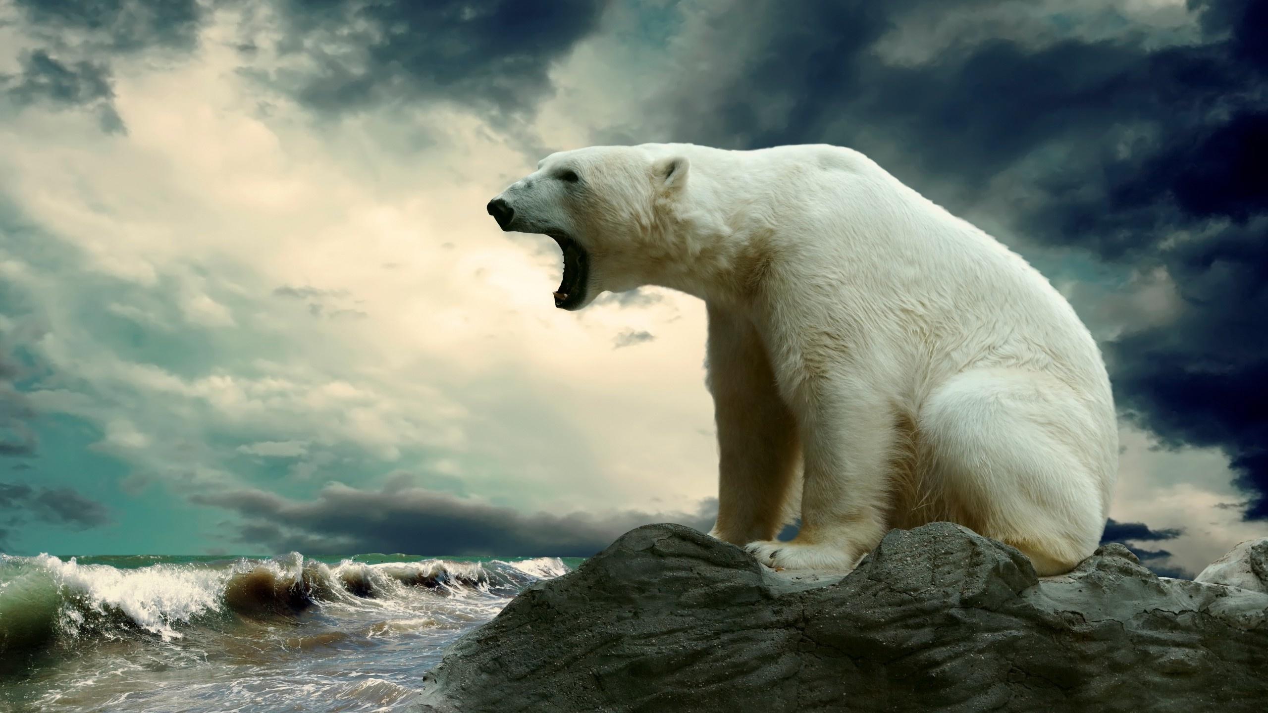 Wallpaper Oso Polar