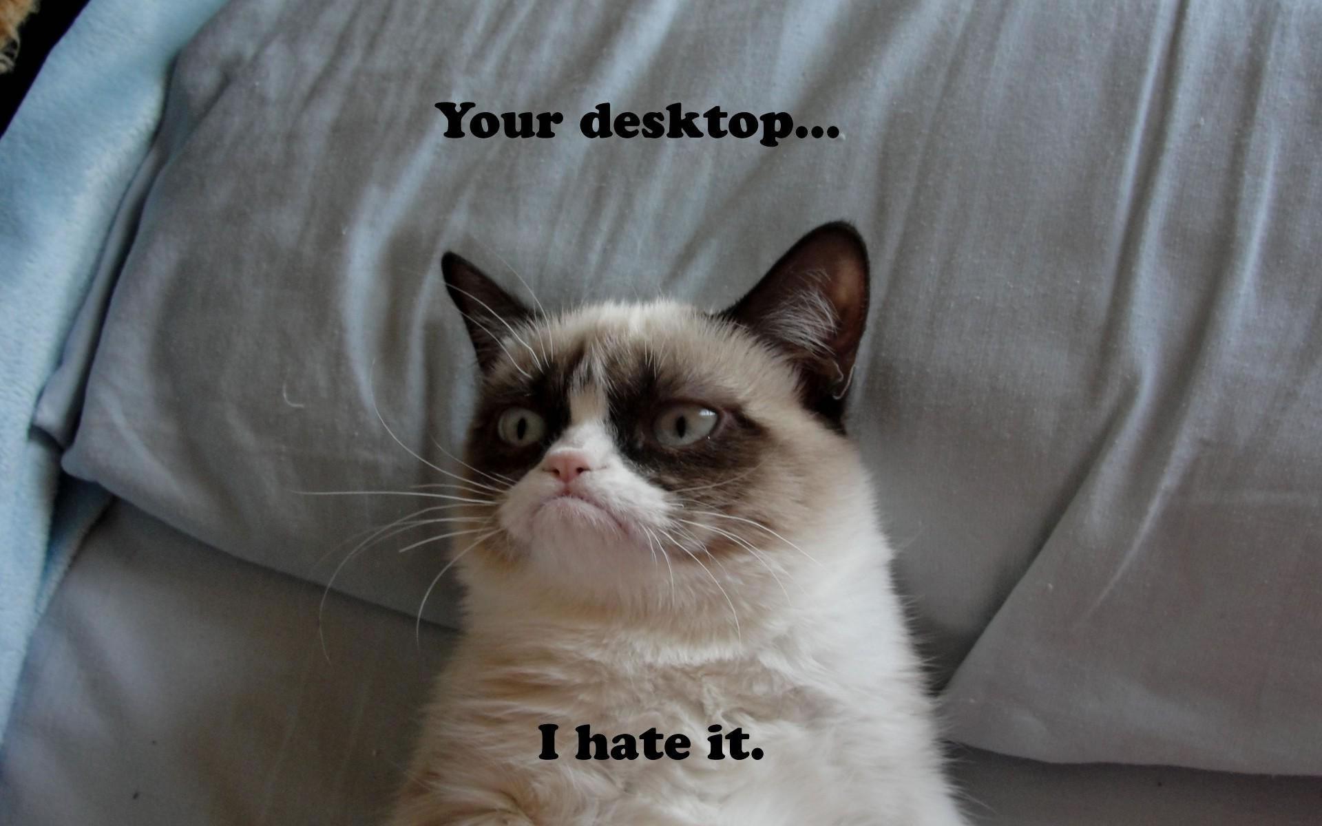 Gatito Enfadado con el escritorio