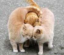 Amor entre Gatitos
