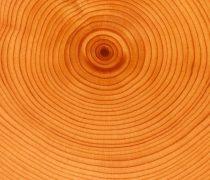 Anillos de Árbol Textura