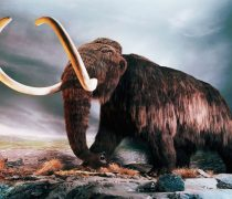Animales Fantásticos. Mamut