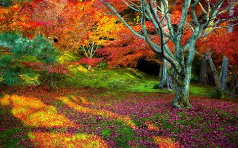 Bosque de Colores.