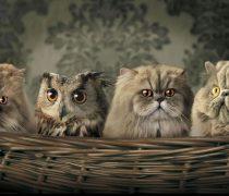 Buho y Gatitos