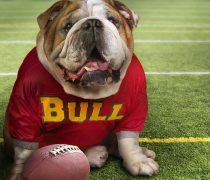 Bulldog Gracioso