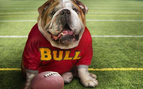 Bulldog Gracioso