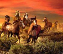 Caballos Cabalgando hacia Pantalla.