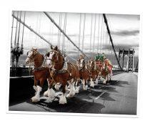Caballos Cruzando un Puente