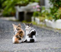 Dos gatitos para el Escritorio.