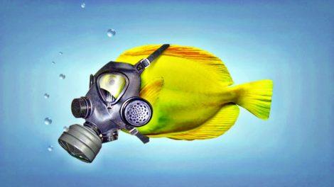 Efectos de la Contaminación en el Mar