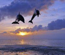 El salto de los delfines.