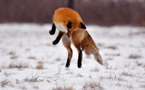 El salto del Zorro.