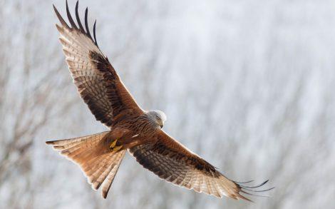 El vuelo del Águila