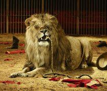 El León y su Domador