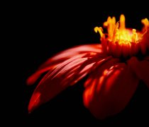 Flor con los pétalos abiertos
