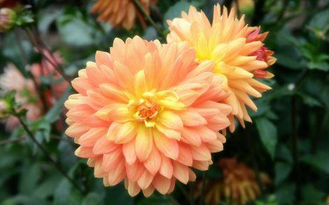 Flor de Primavera.
