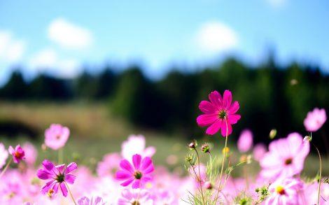 Flores en el Escritorio