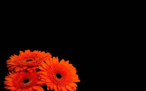 Flores Naranjas Wallpaper
