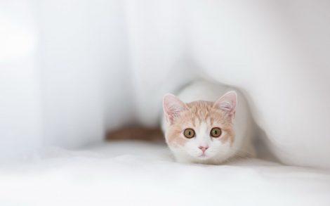 Gatito Blanco.